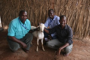 World Concern staff members receive a goat as a gift!