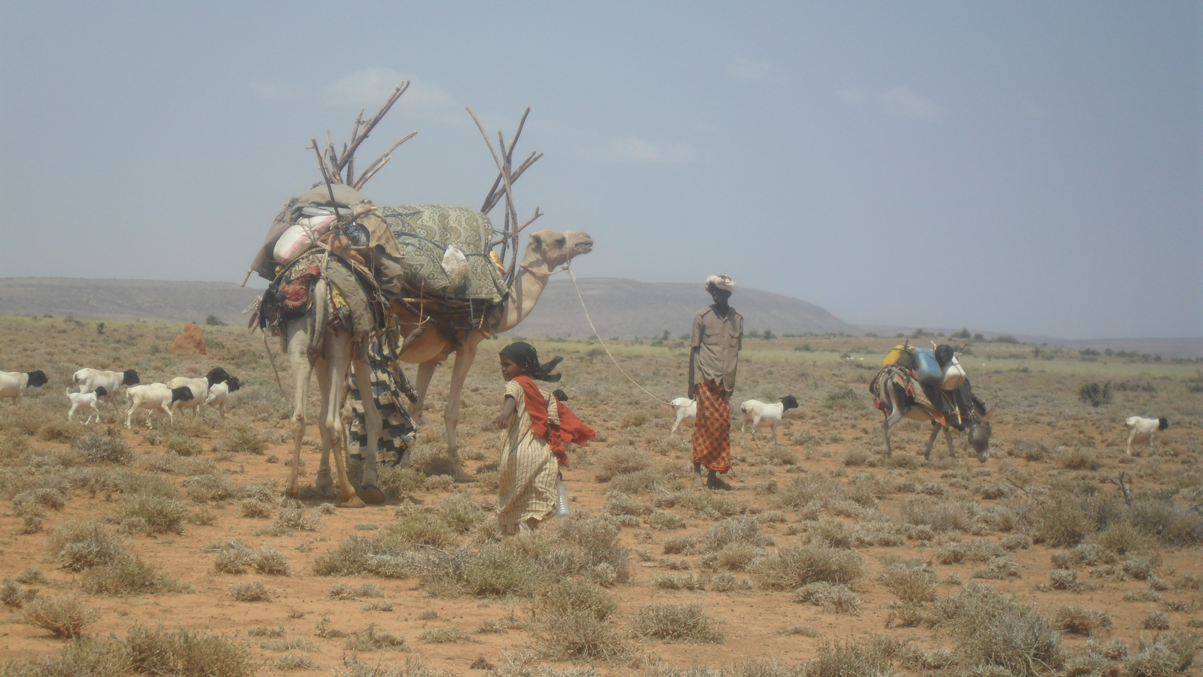 horn of africa and somalia Section 2 2011 drought in east africa, famine in somalia the summer of 2011 produced one of the worst droughts in 60 years in the horn of africa.