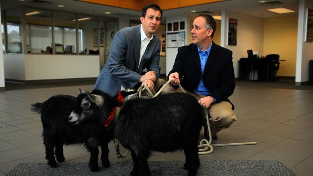 Kurt and Craig Campbell with goats in their dealership.