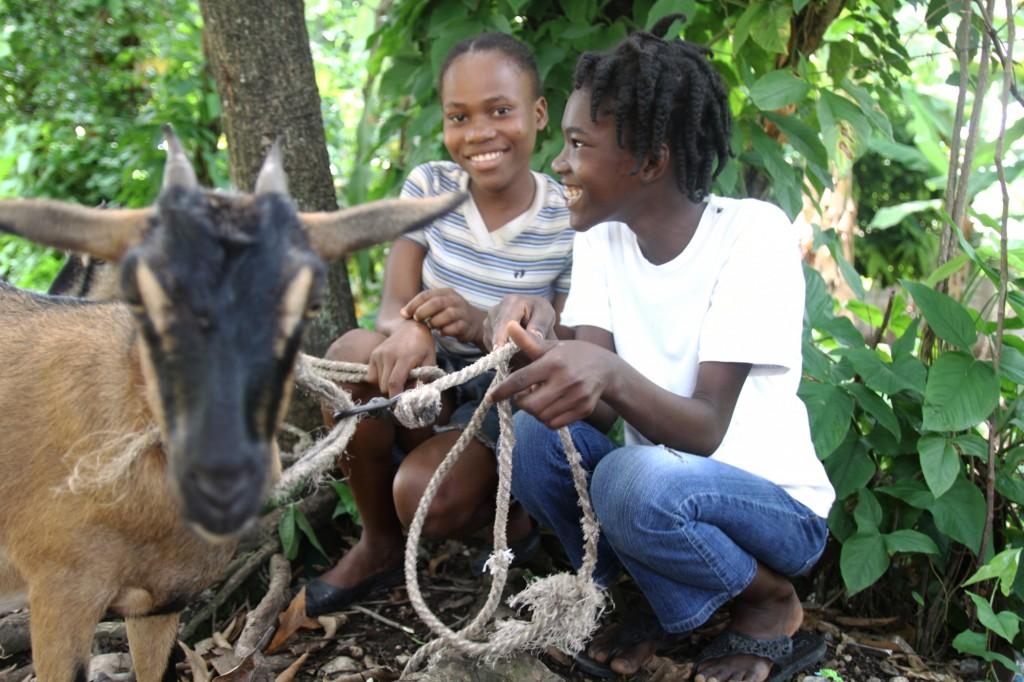 Horny goat weed vs viagra